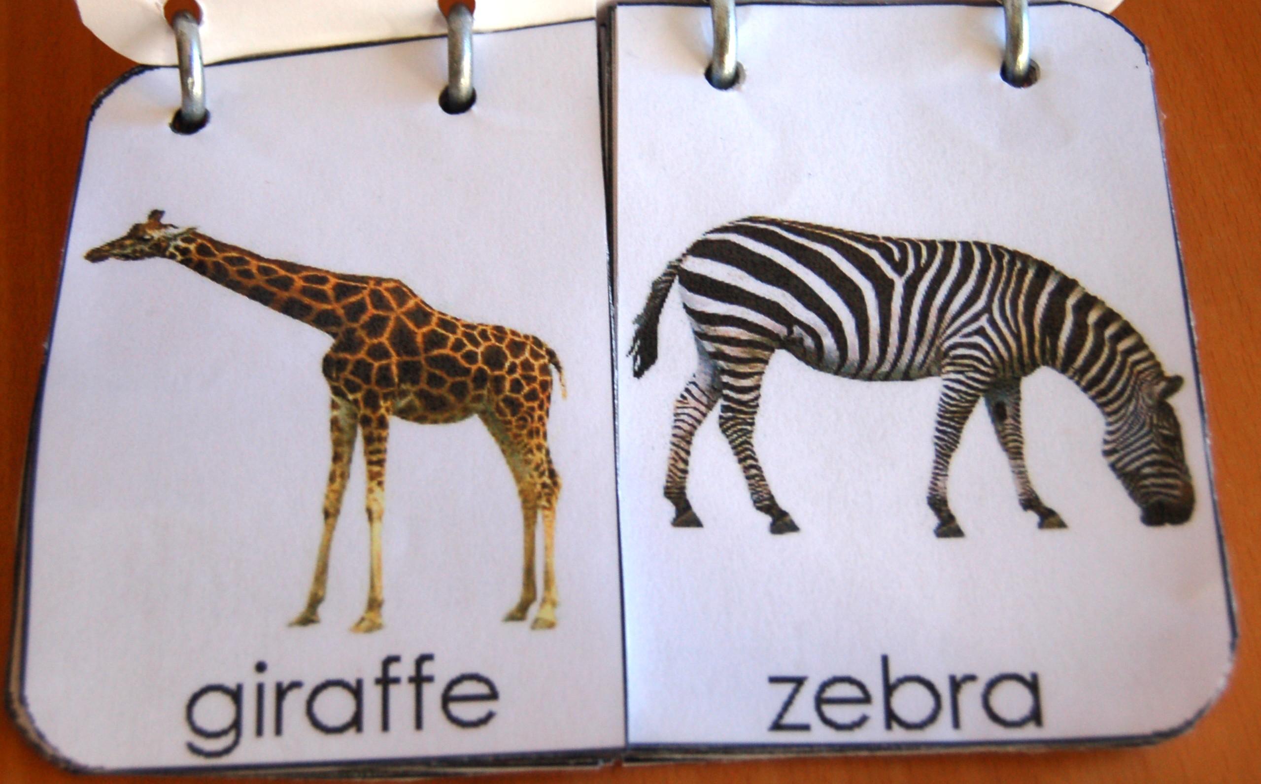 Lo zoo e gli animali libri ed attivit per bambini - Libro da colorare elefante libro ...