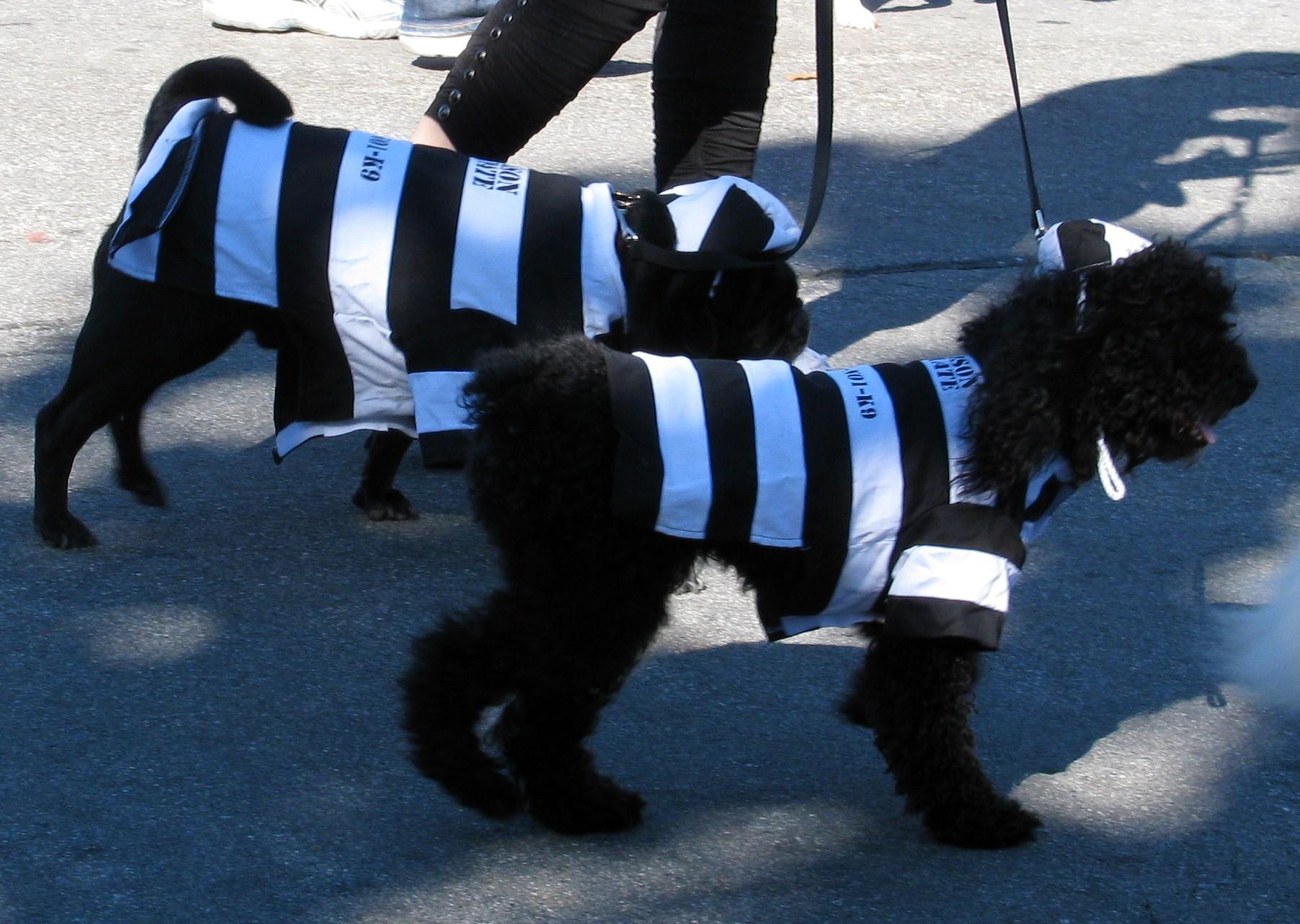 Idee per halloween dall america costumi per animali for Box per cavalli fai da te