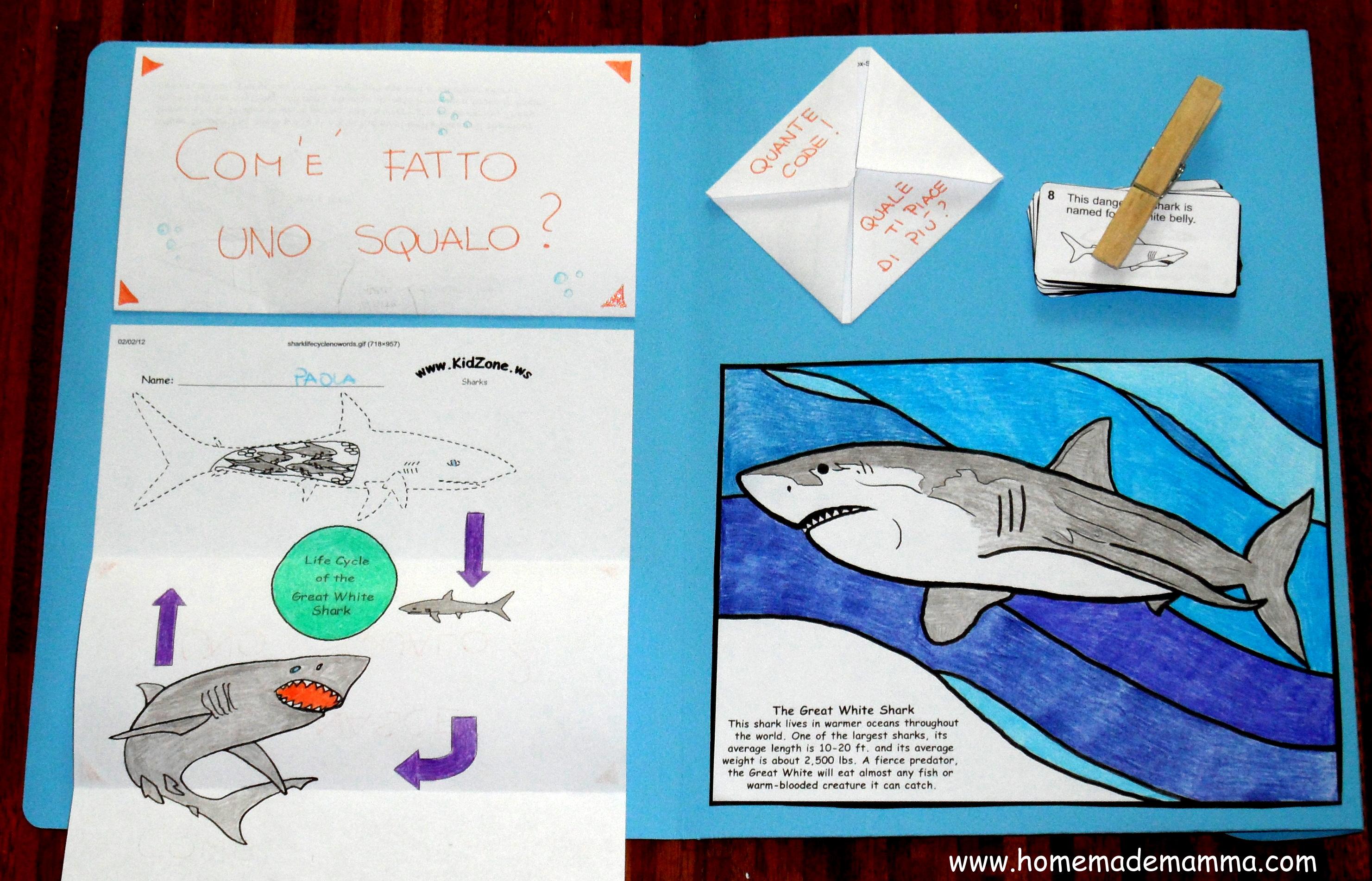 Disegni da colorare squali for Squalo bianco da colorare