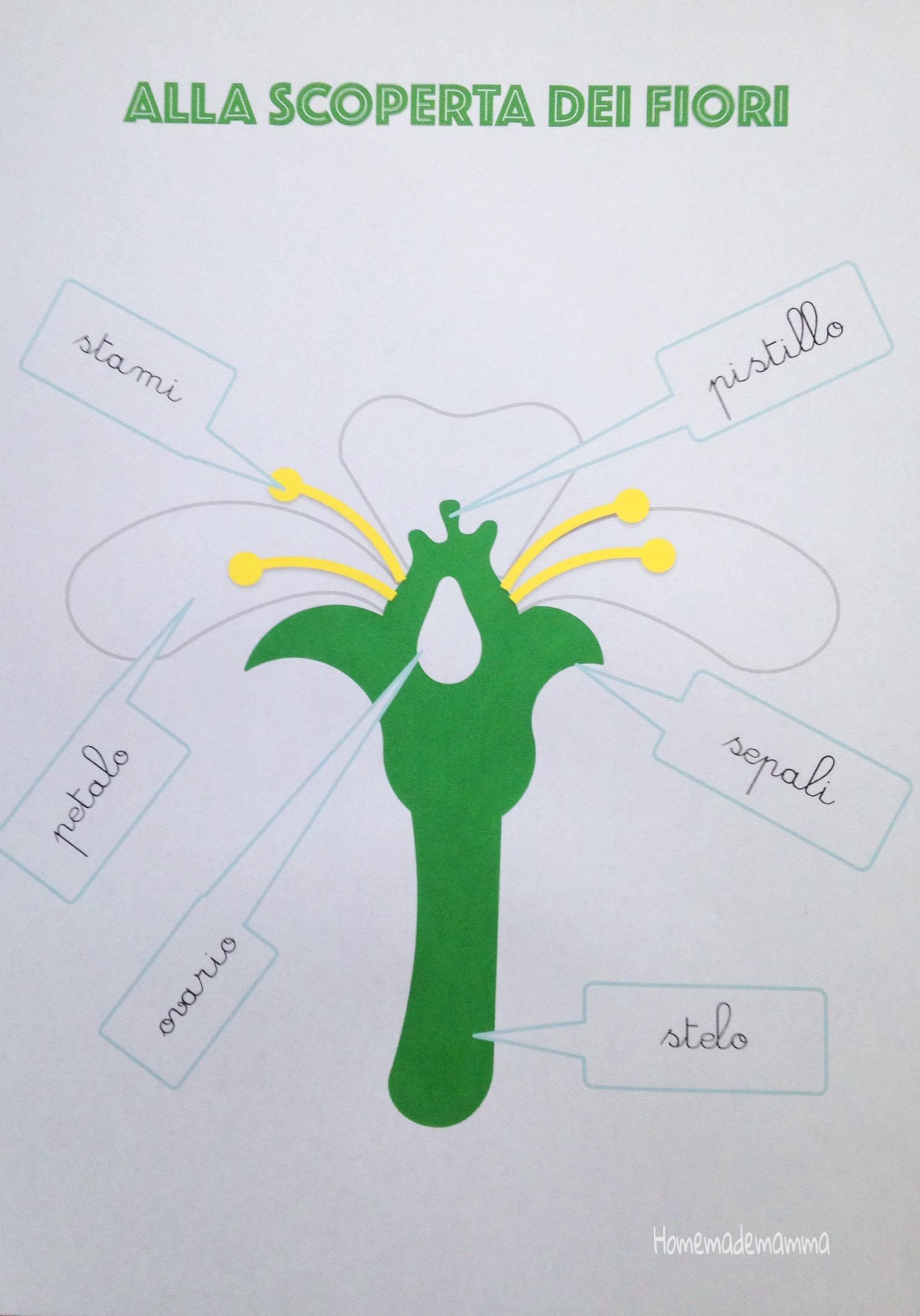 schede botanica montessori gratis