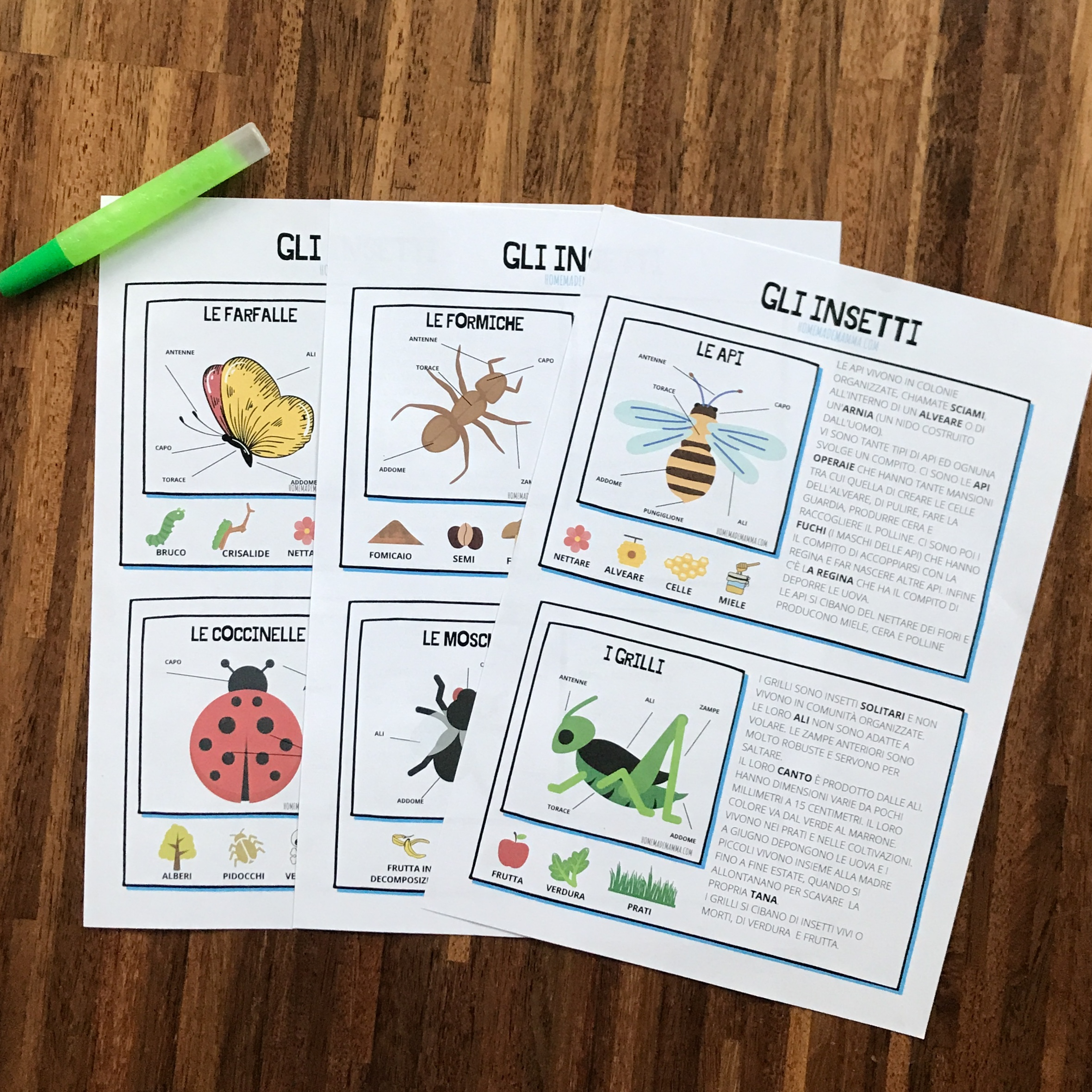Schede insetti scuola primaria