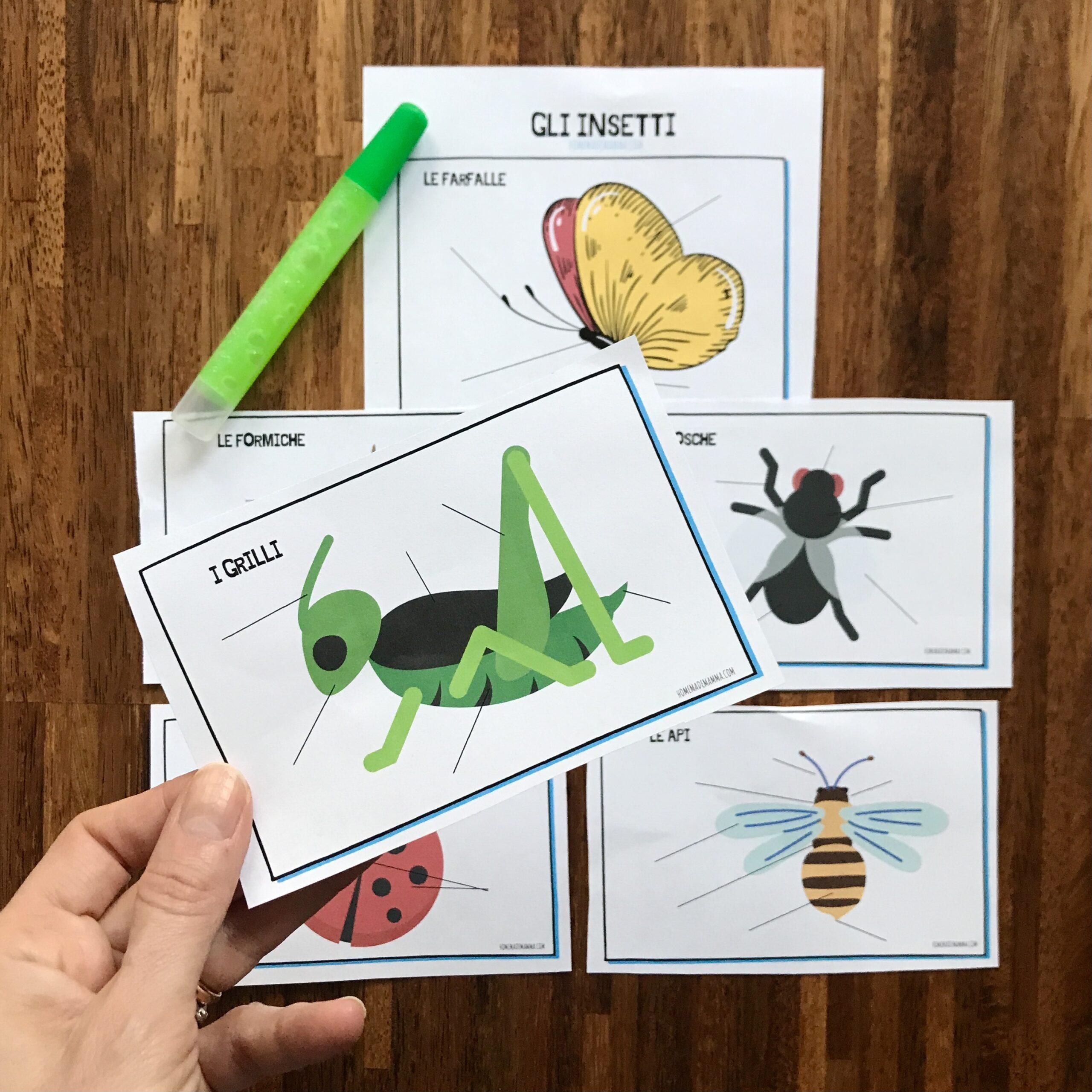 Attività sugli insetti scuola primaria