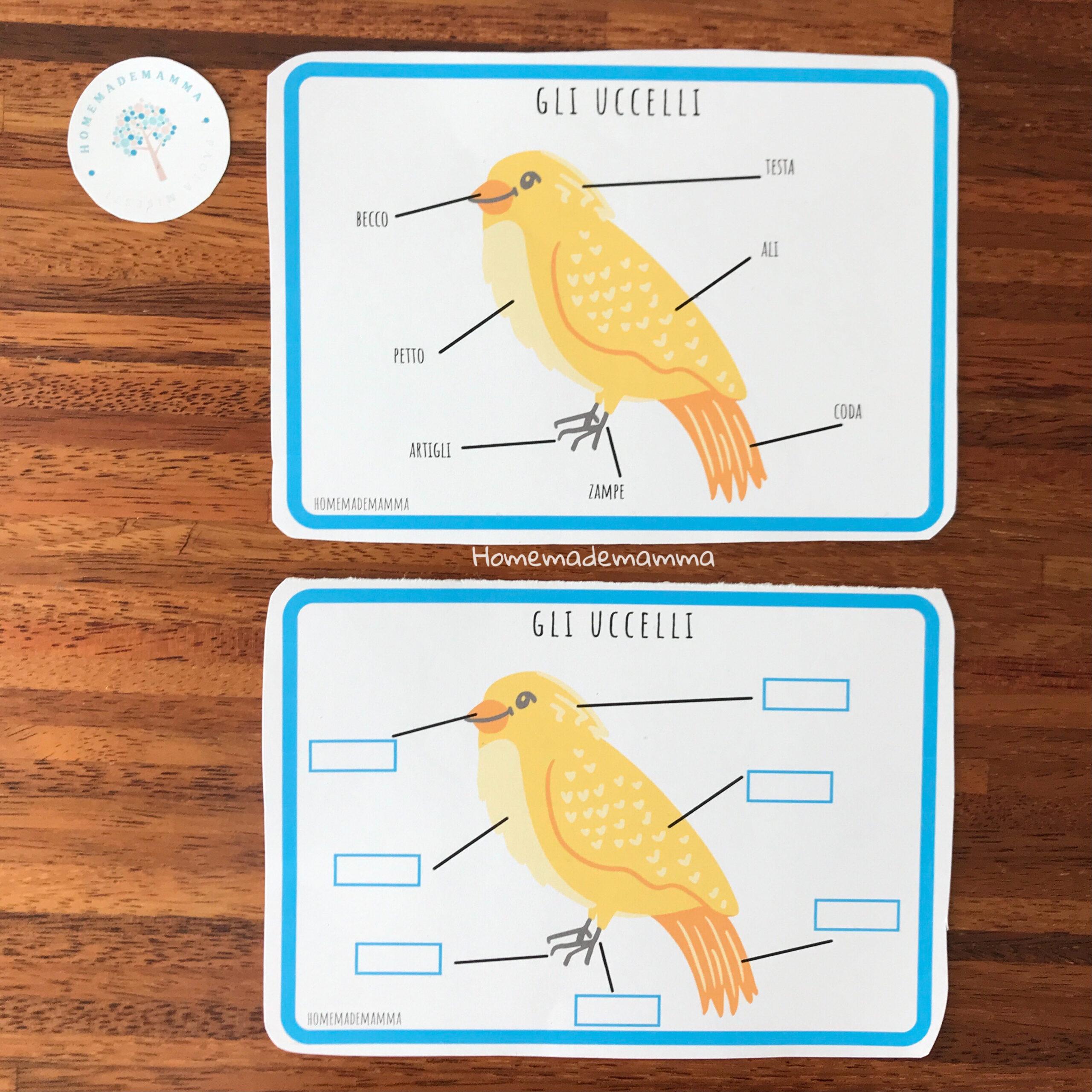 Schede e giochi per scoprire gli uccelli Da stampare Bambini scuola primaria